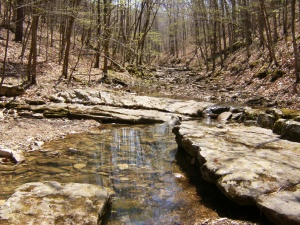 Buffalo River.Beech Creek to Kyles.2014-04-18.008